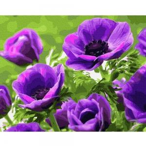 Картина по номерам BrushMe 40*50см Фиолетовые маки (GX27709)