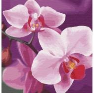 Картина по номерам Идейка 30*30см Волшебная орхидея (КНО3105)