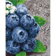 Картина по номерам Идейка 40х50см Сочные плоды (КНО5581)