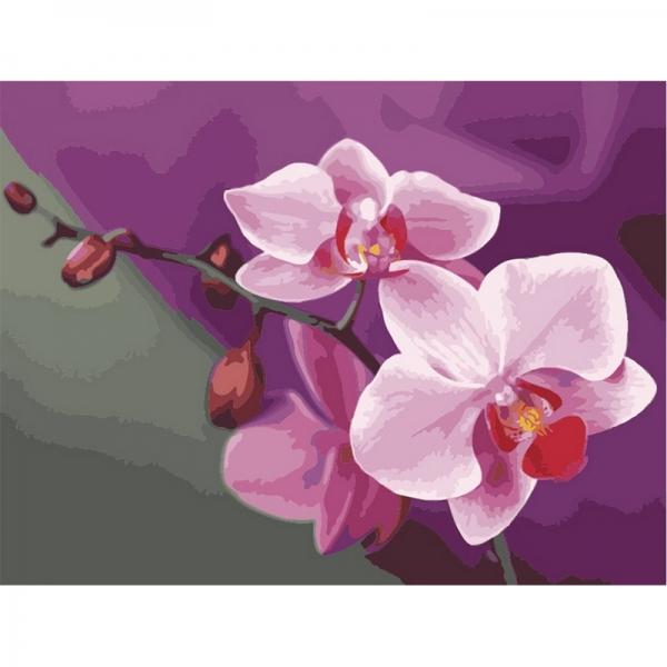 Картина по номерам Идейка 40*50 см Розовые орхидеи (КН1081)