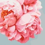 """Картина по номерам Идейка 40х40см  """"Розовые  пионы"""""""